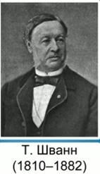 Т. Шванн