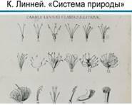 Страницы «Системы природы» Карла Линнея