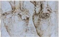 Рисунки Леонардо да Винчи (XV век)