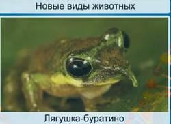 Новые виды животных, описанные учеными
