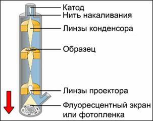 Принцип работы электронного микроскопа